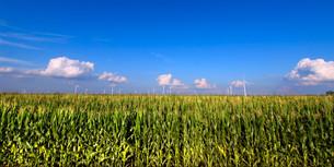 grass_fieldsの写真素材 [FYI00851422]