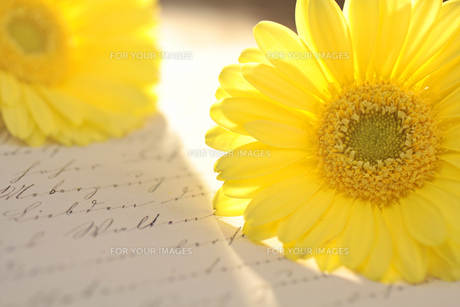 yellow flower and old letterの写真素材 [FYI00852760]