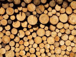 woodpileの素材 [FYI00852805]
