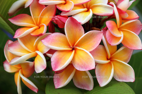 plants_flowersの素材 [FYI00853488]