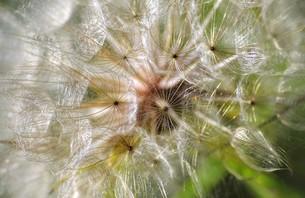 plants_flowersの写真素材 [FYI00853512]
