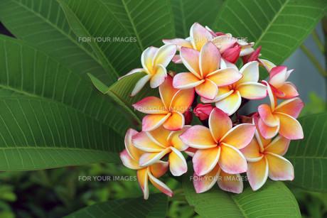 plants_flowersの素材 [FYI00853516]