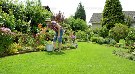 care of the flowers in the gardenの写真素材 [FYI00854266]