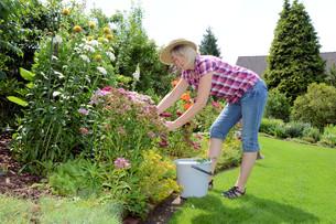 gardening in julyの写真素材 [FYI00854285]
