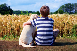 boy with labrador retriever in front cornfieldの写真素材 [FYI00854490]