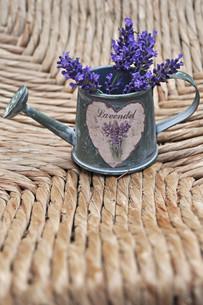 lavender potの写真素材 [FYI00854497]