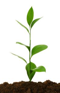leafの写真素材 [FYI00854553]