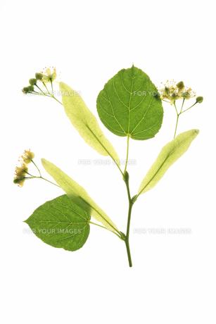 plants_flowersの写真素材 [FYI00854809]