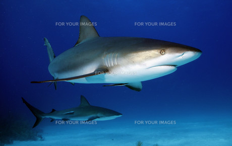 sharksの写真素材 [FYI00854954]