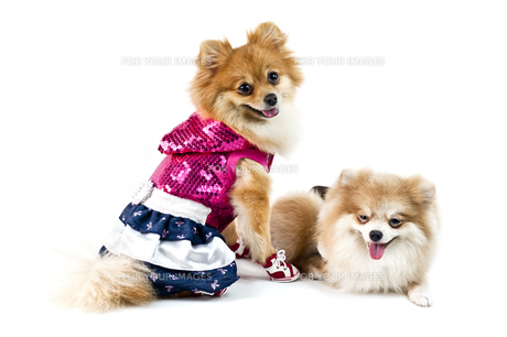 skirtの写真素材 [FYI00855085]
