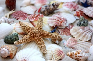 mussels,snails and starfishの写真素材 [FYI00855380]