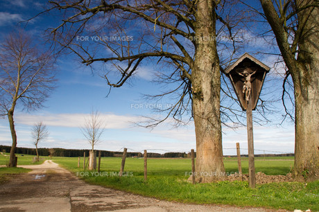 cross,inri,forest,path,road,hiking,risen,rise,auferstの写真素材 [FYI00855689]