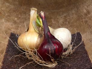 onionsの素材 [FYI00855726]