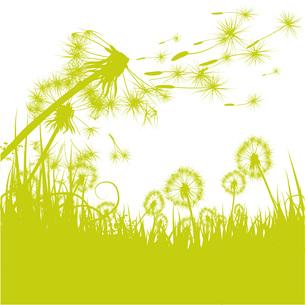 grass pusteblumeの写真素材 [FYI00855848]