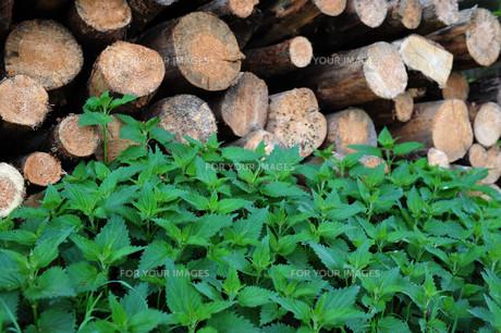 woodpileの素材 [FYI00856302]