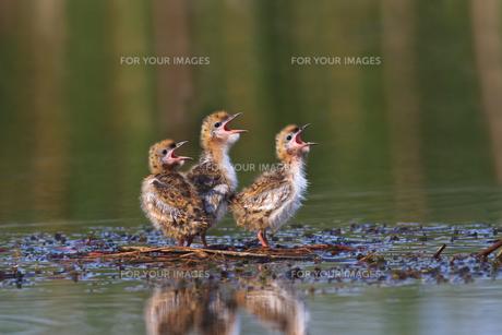 birdsの写真素材 [FYI00856807]