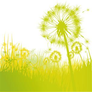 grass and dandelionの写真素材 [FYI00856925]