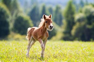 useful_animalsの写真素材 [FYI00857153]