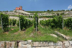 vineyard at the unstrut,saxony-anhalt,germanyの写真素材 [FYI00857274]