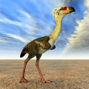 terror bird phorusrhacosの写真素材 [FYI00857436]
