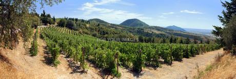 vineyard in the euganean hillsの素材 [FYI00857461]