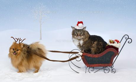 home_animalsの写真素材 [FYI00857620]
