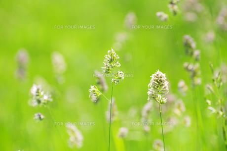 nature_environmentの素材 [FYI00858442]
