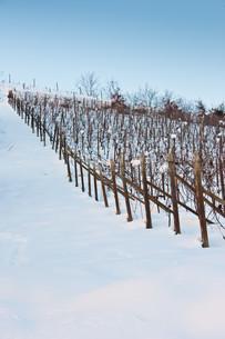 winterの写真素材 [FYI00858583]