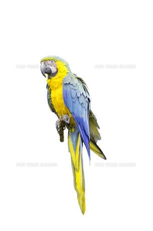 birdsの写真素材 [FYI00858886]