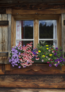 flower arrangement on almh?tteの写真素材 [FYI00858987]