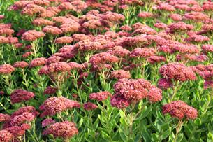 plants_flowersの素材 [FYI00859223]