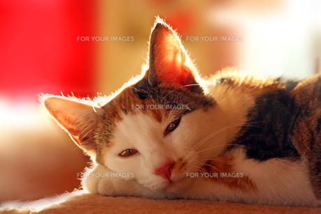 home_animalsの素材 [FYI00859414]