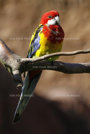 birdの写真素材 [FYI00859477]