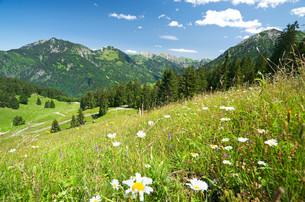alpine meadow in germanyの写真素材 [FYI00859815]