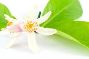 plants_flowersの写真素材 [FYI00860087]