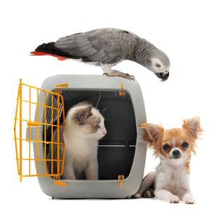home_animalsの素材 [FYI00860211]