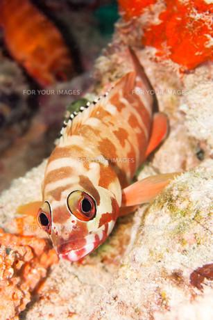 underwater_worldの素材 [FYI00861291]