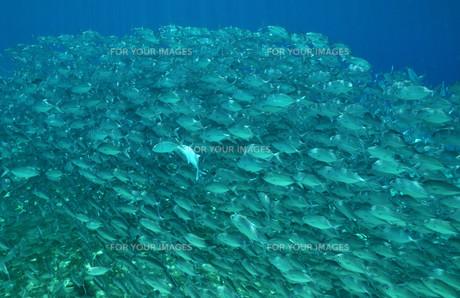 fishes_crustaceansの素材 [FYI00861564]