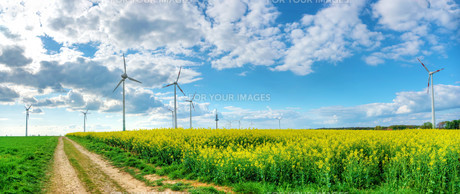 dramatic cloudy sky with rapeseed field and wind powerの写真素材 [FYI00862091]