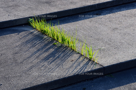 grass and concreteの写真素材 [FYI00862809]