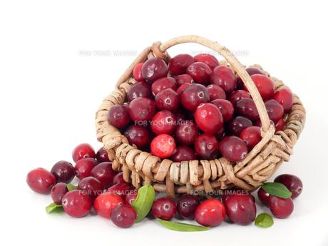 cranberriesの素材 [FYI00863033]