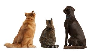 dogの写真素材 [FYI00863077]
