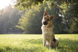 home_animalsの写真素材 [FYI00863113]