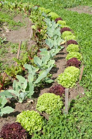 vegetable saladの写真素材 [FYI00863180]