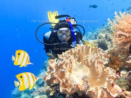 underwater_worldの素材 [FYI00863715]