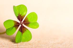 four-leaf cloverの写真素材 [FYI00864051]