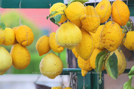 large lemons at a market stallの写真素材 [FYI00864444]