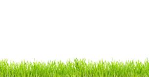 nature_environmentの素材 [FYI00864464]