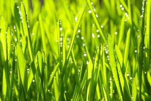 nature_environmentの素材 [FYI00864482]