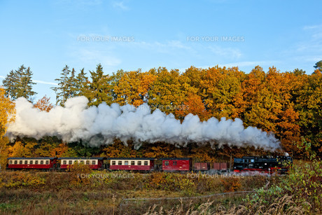 harz narrow gauge railways in the autumn / selketalbahn in harzgerodeの素材 [FYI00864718]